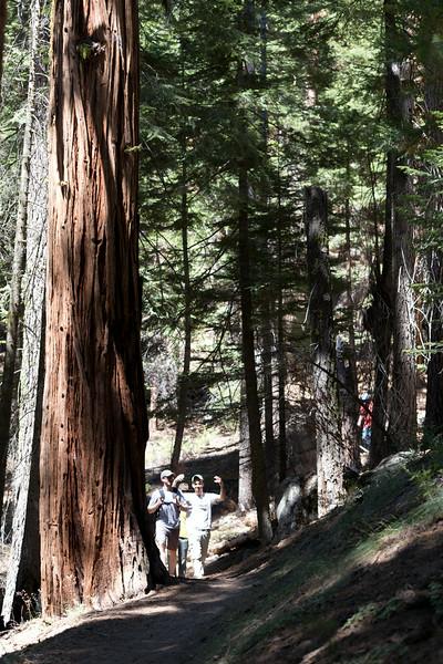 Sequoia_0240.jpg