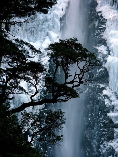 DSCN9938 AR Tree Waterfall NZ ALA PS-001.jpg