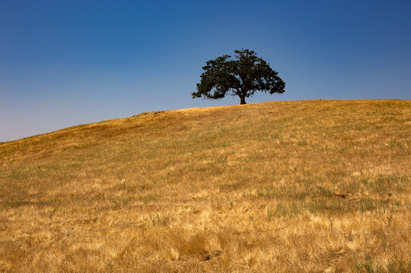 Sequoia-4841.jpg