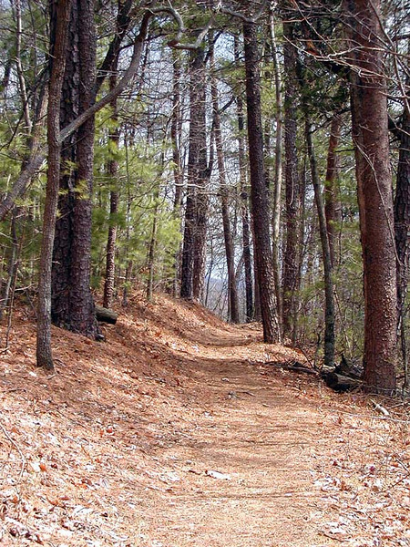 """Chestnut Top Trail is lovely and smells wonderfully of pine. The treadway here is soft underfoot. I call these kind of woods """"Red Ridinghood Forest"""" GSMNP TN 2008"""