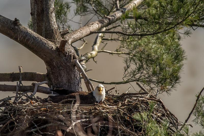 ulster-eagle-29.jpg