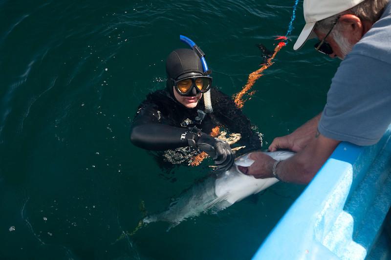 20090420_Underwater_Mexico_0270.jpg