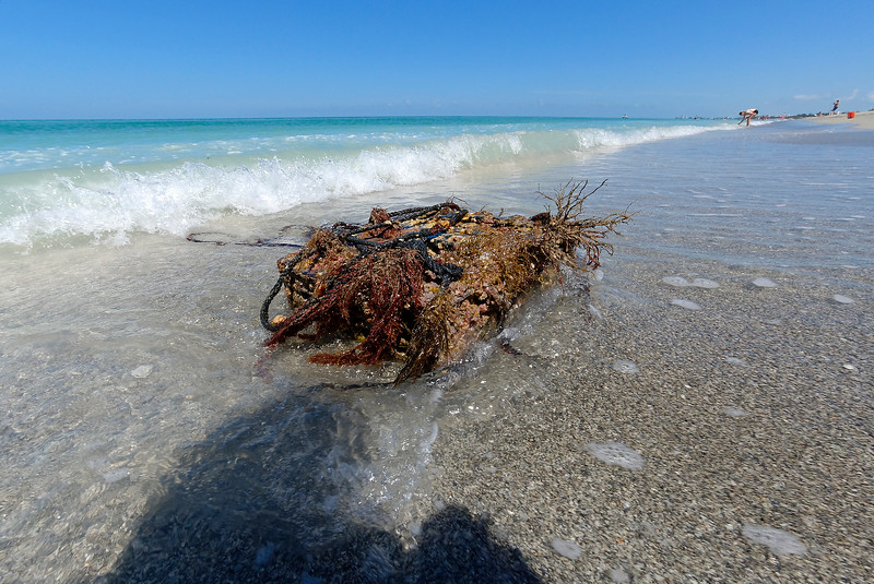 Crusty Trap - Siesta Key Florida