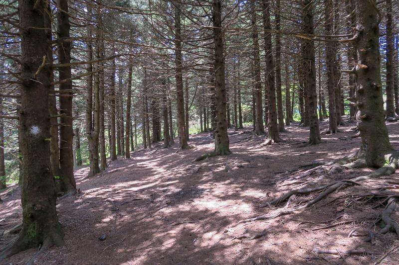 Mountains-to-Sea Trail -- 5,880'
