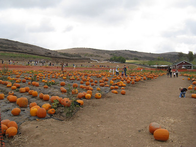 2009 October Pumpkin Patch