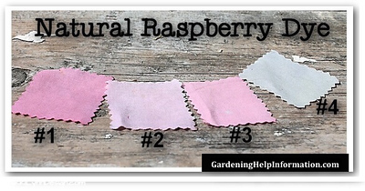 Natural Raspberry Dye Swatches