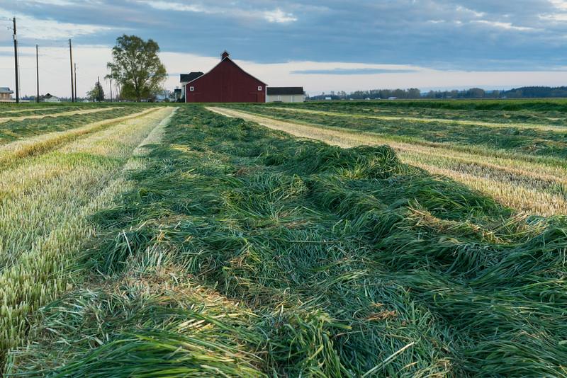 grass1-7747.jpg