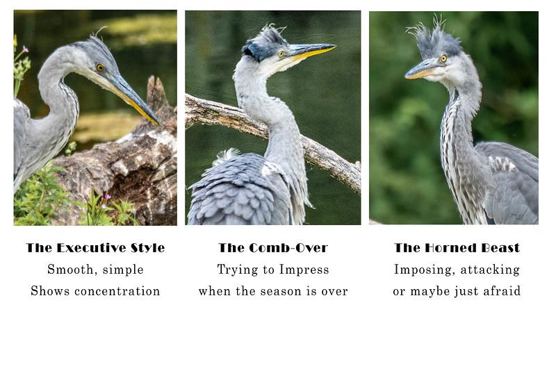 Grey Heron Hair