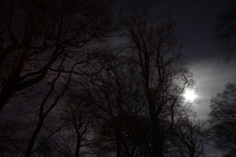 Bluebell Woods framed by the moon on a clear and very cold night.