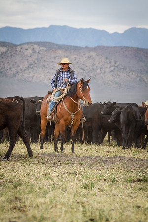 Carter Cattle Company 2015
