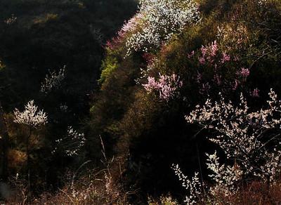 qiangzilu great wall【April】