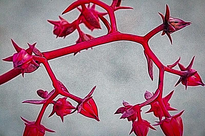 January 3 - Red vine-1.jpg