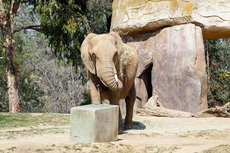 2016.06.01 Safari Park 0282.jpg