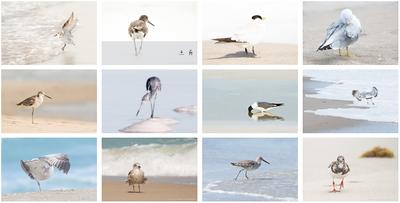 Shorebirds 1