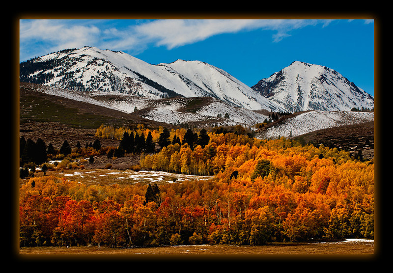 Fall Color Explosion - Conway Summit in the Eastern Sierras