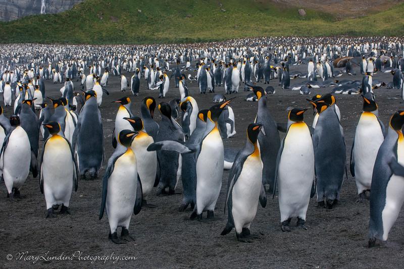Antarctic-108