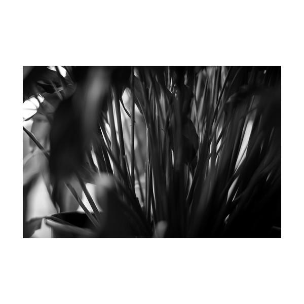 204_lily_10x10.jpg