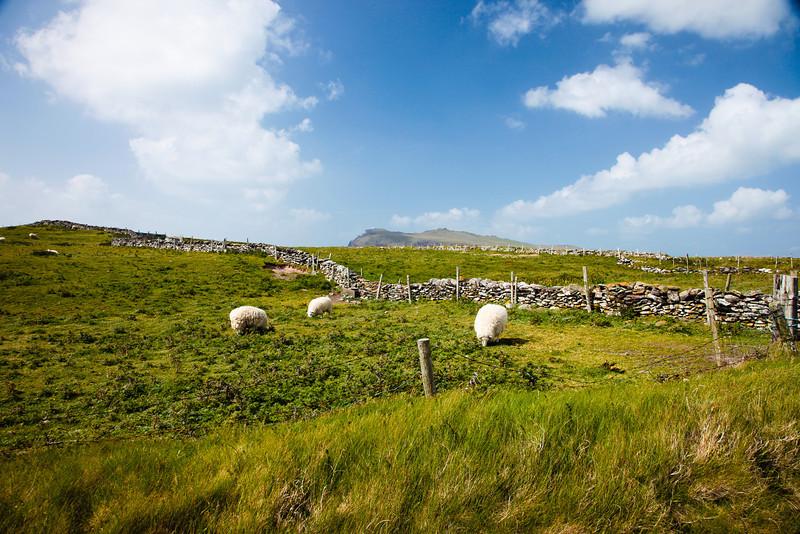 Ireland-0230.jpg
