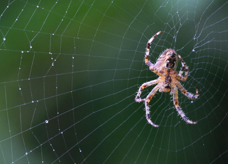 5888 Spider.jpg
