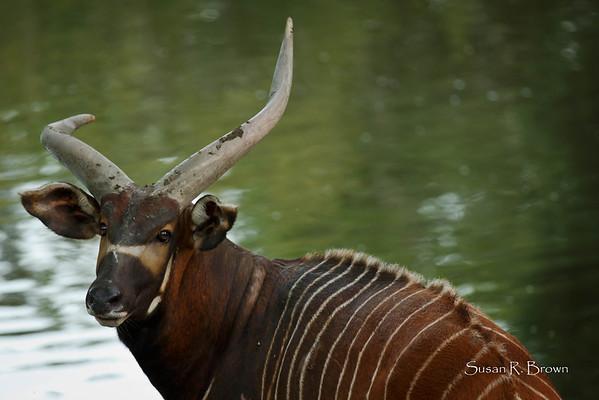 Safari West 2013