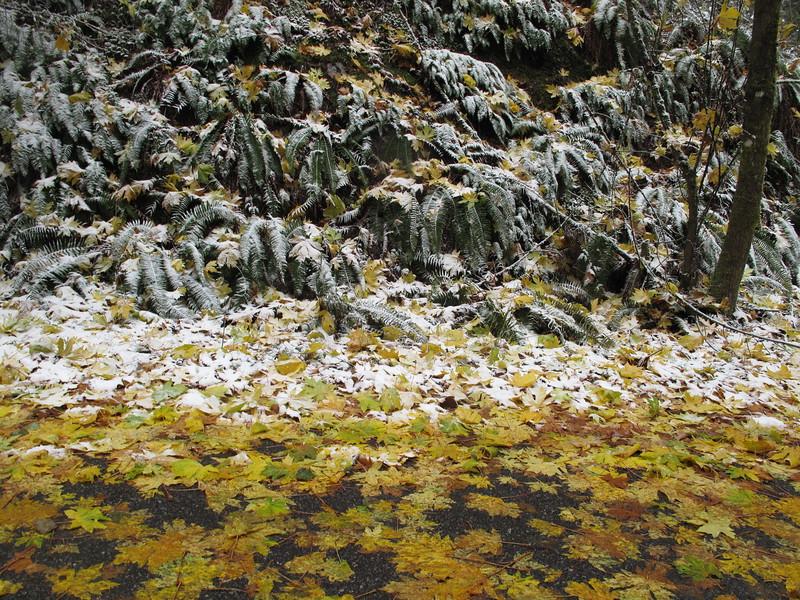 IMG_7909 Mt Erie winter Fall forest.jpg