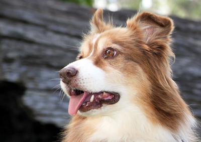 Pets & animal sample photographs.