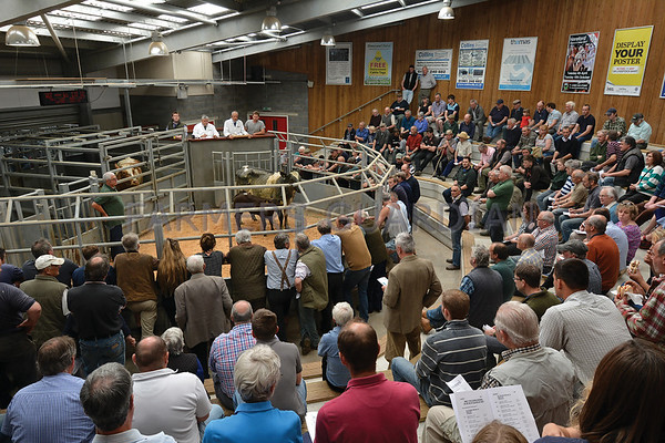 Hereford Auction Mart June 2017