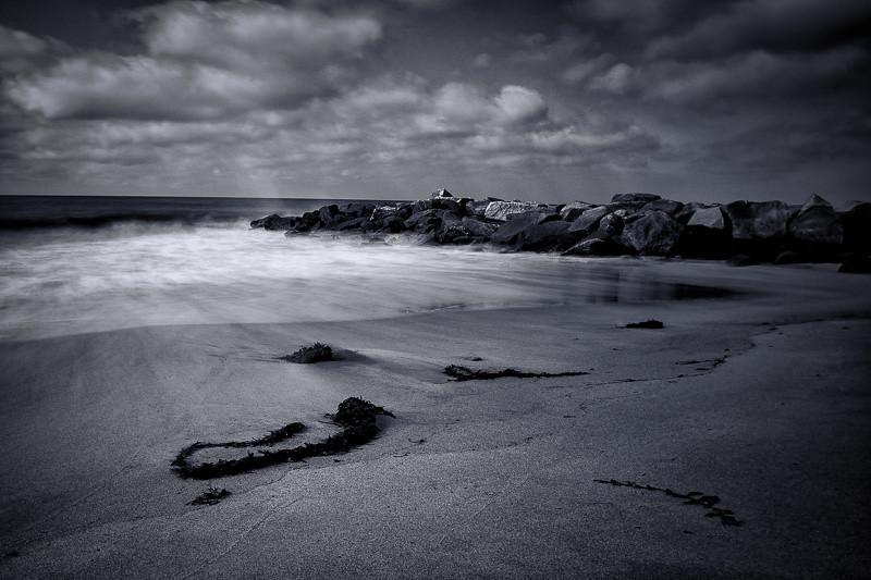 March 31 - Seaweed.jpg