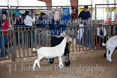 2011 Klein ISD Goat Show Class 2