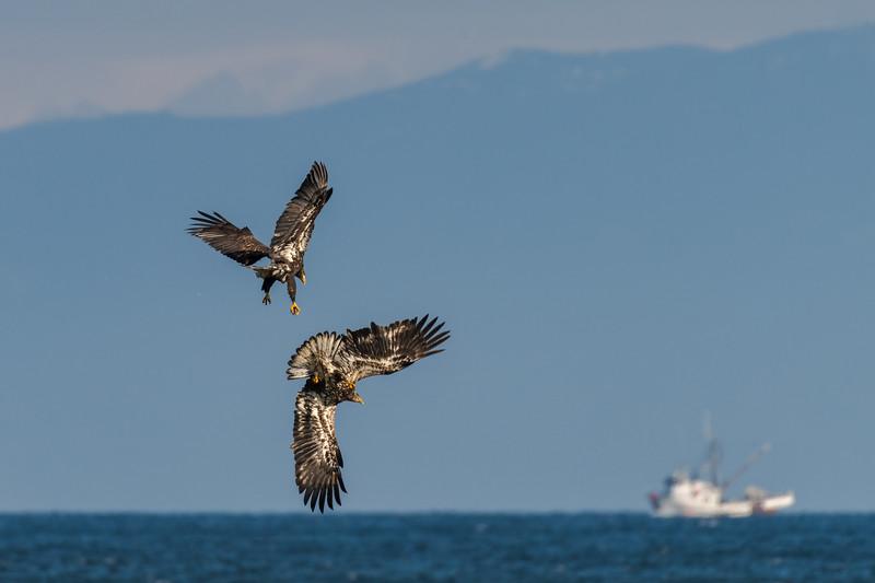 Eagles Scenic