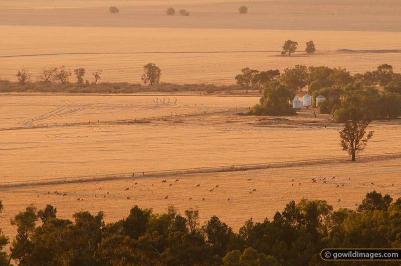 Rural farmland scene, sheep, early morning, from Mt Terrick Terrick, Terrick Terrick NP