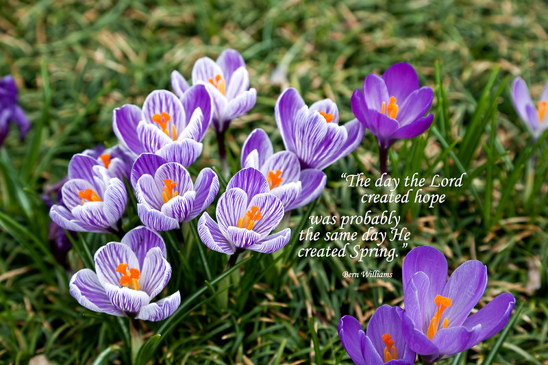 The day the Lord created hope was probably the same day He created Spring.