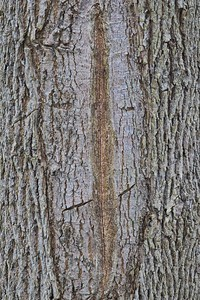 Bark Structure Detail