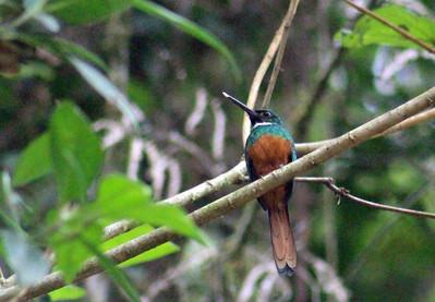 El Copal BIRDS  (21)