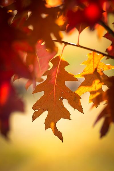 20151024-Fall Colors-74.jpg