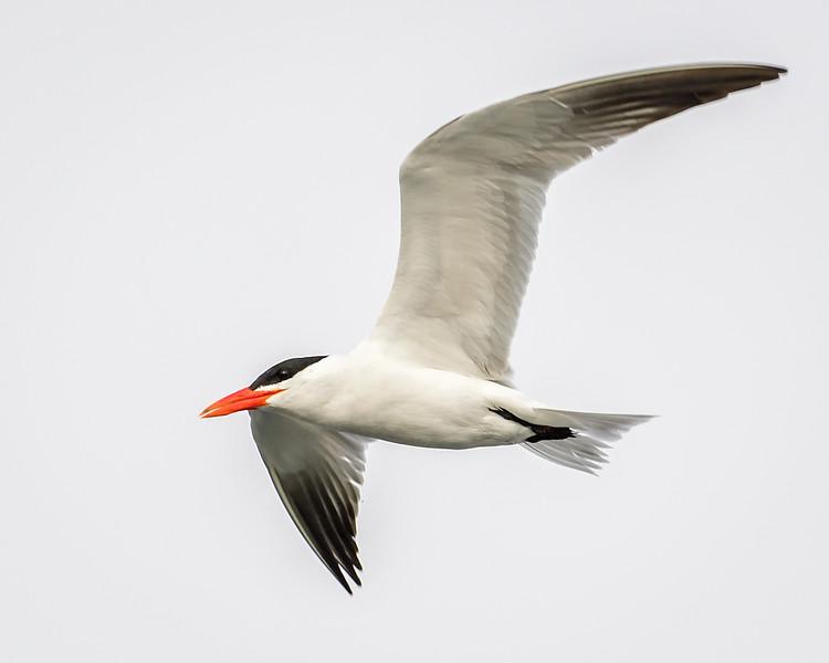 Elkorn Slough - Moss Landing - Monterey Bay, CA USA