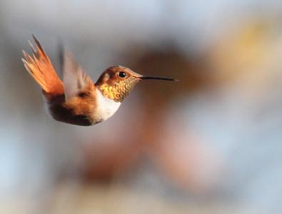 Rare Birds: Shenandoah Valley, VA