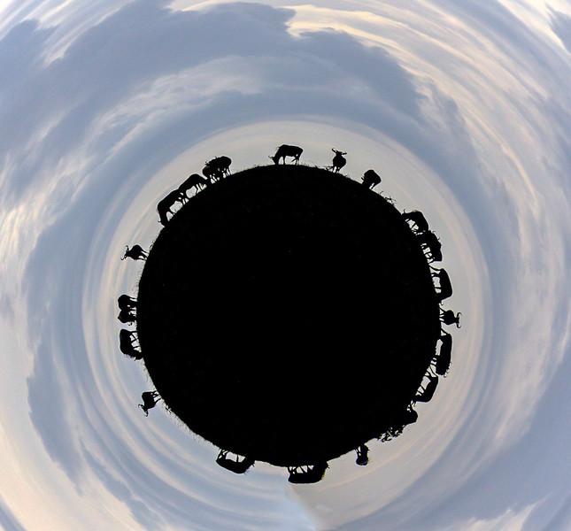 Small Wildebeest Planet