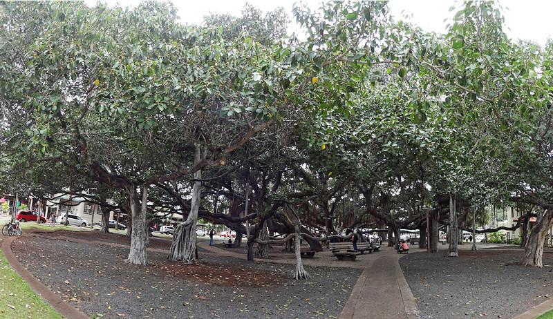 Hawaii, Maui March 2015 047.JPG