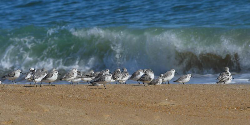 birds 0183 10x20.jpg
