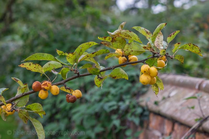 Hob Green autumn-17.jpg
