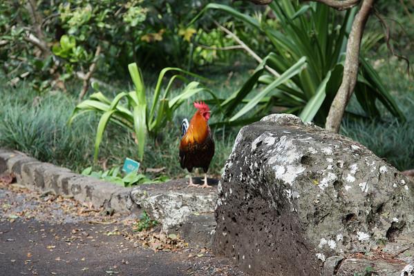 Hawaii-2012