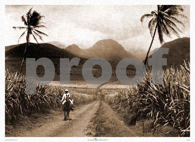 273: 'Sugar Cane Fields, Oahu' From a sepia-toned photograph published in Paradise of the Pacific, ca 1922. (PROOF watermark will not appear on your print)