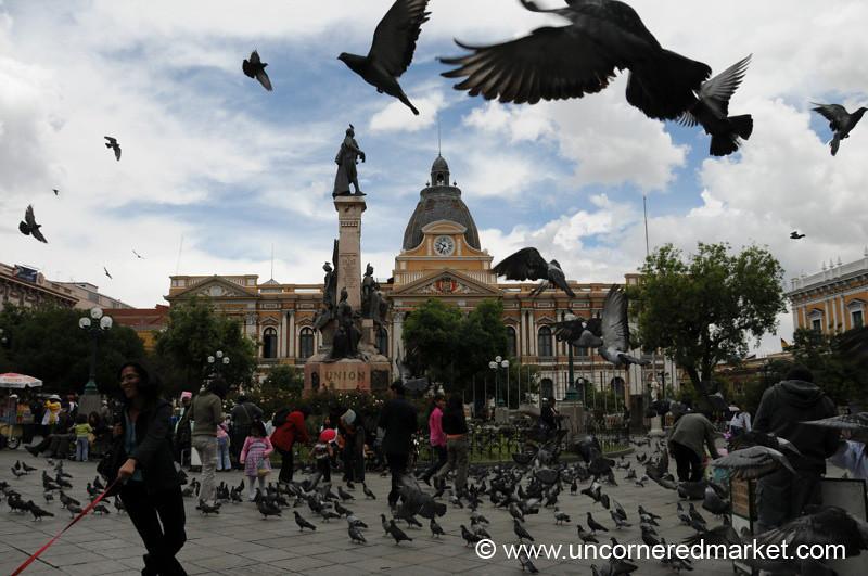 Sky Full of Birds - La Paz, Bolivia