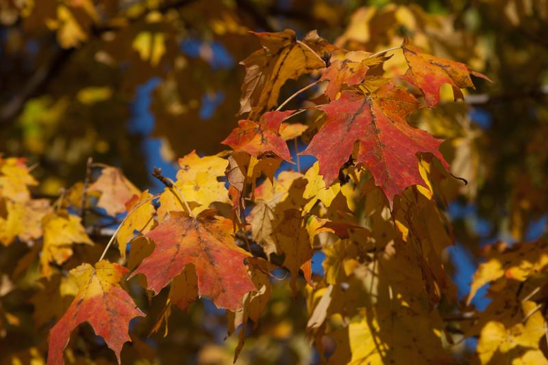 20121021-2012-10-2116-25-2313207.jpg