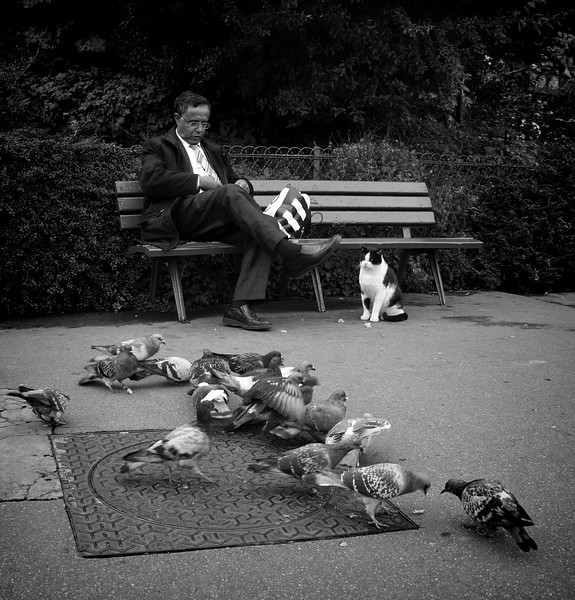 Paris B&W man on bench birds 039.jpg
