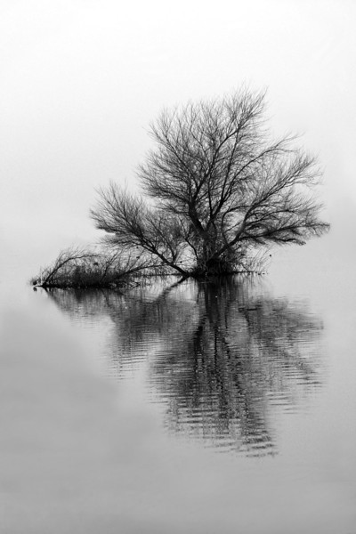 Tree in the marsh
