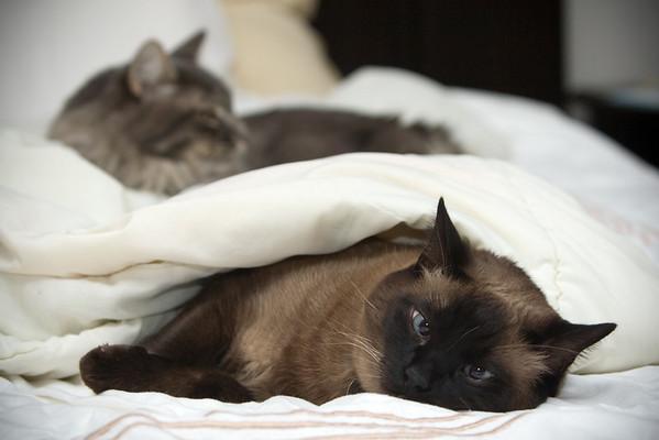 2008: Mushu and Meeko