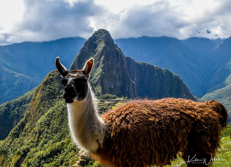 2018 Machu Picchu-49.jpg