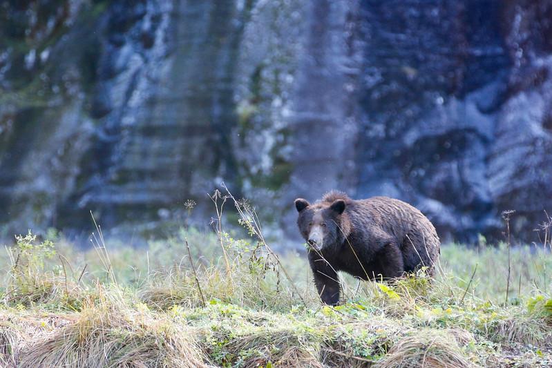 Cautious Bear.jpg